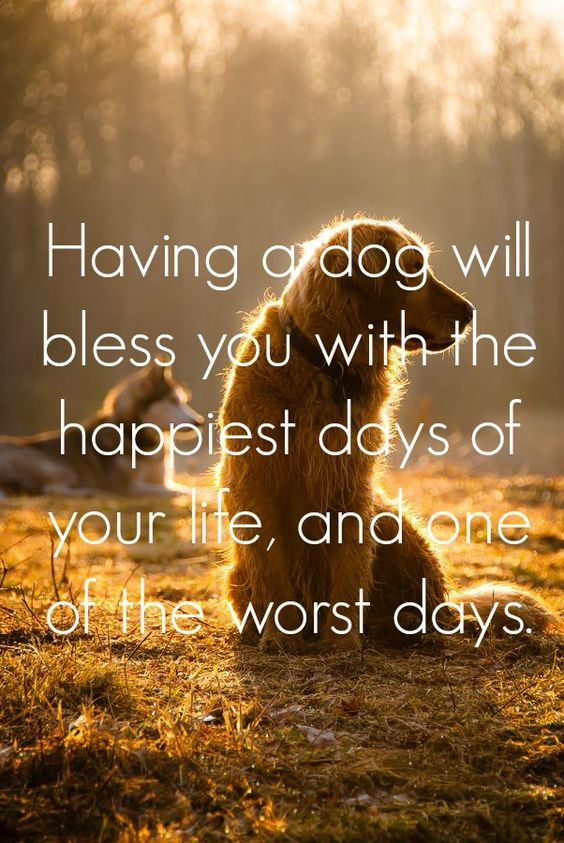 Quotes About Losing A Dog. Sympathy Quotes For Losing A Pet ...